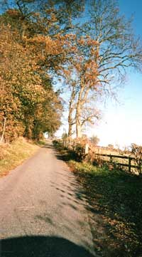 County lane in summer